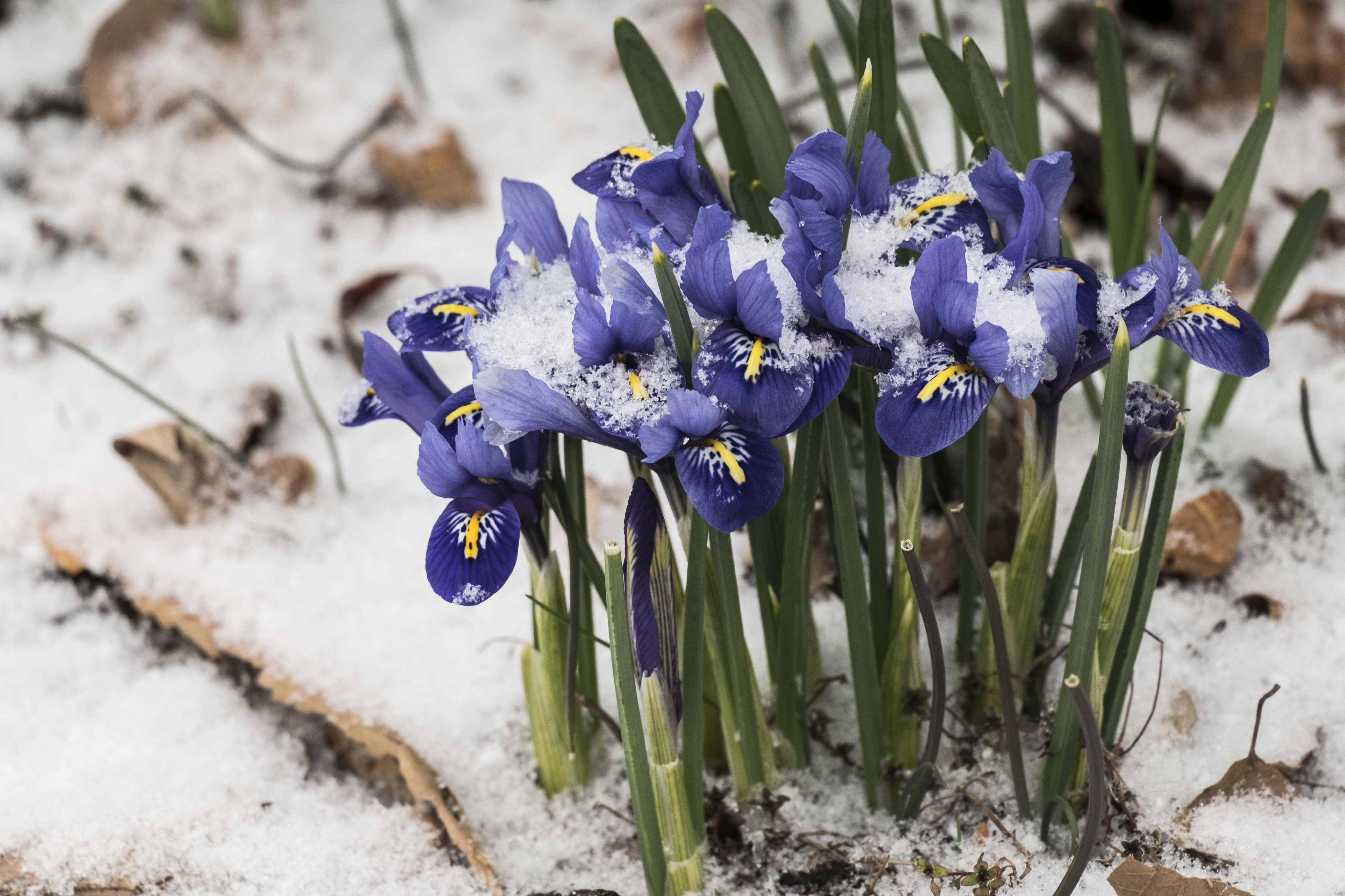 Sure it's snowing but… flowers!